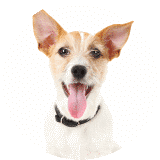Smaller Dog Health Plan